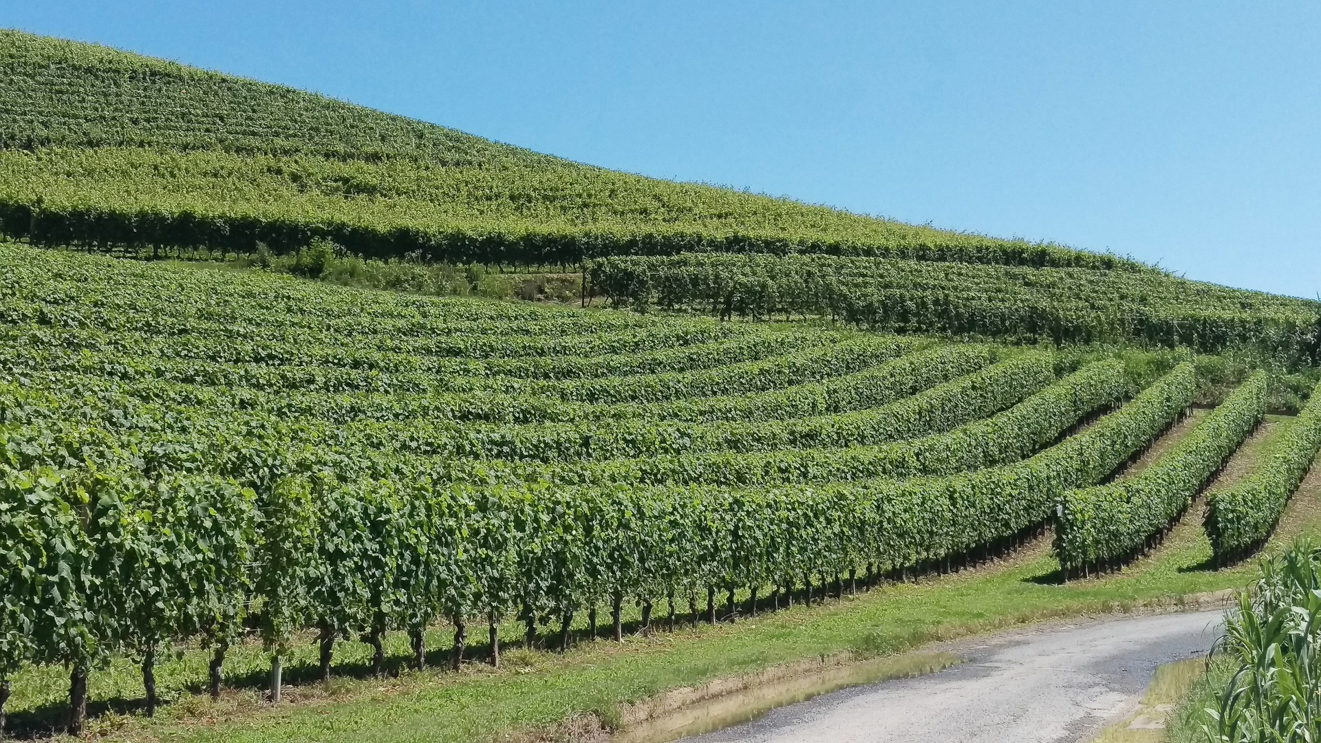 Trip to the Langhe